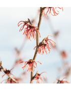Autres produits cosmétiques naturels - OriginOil